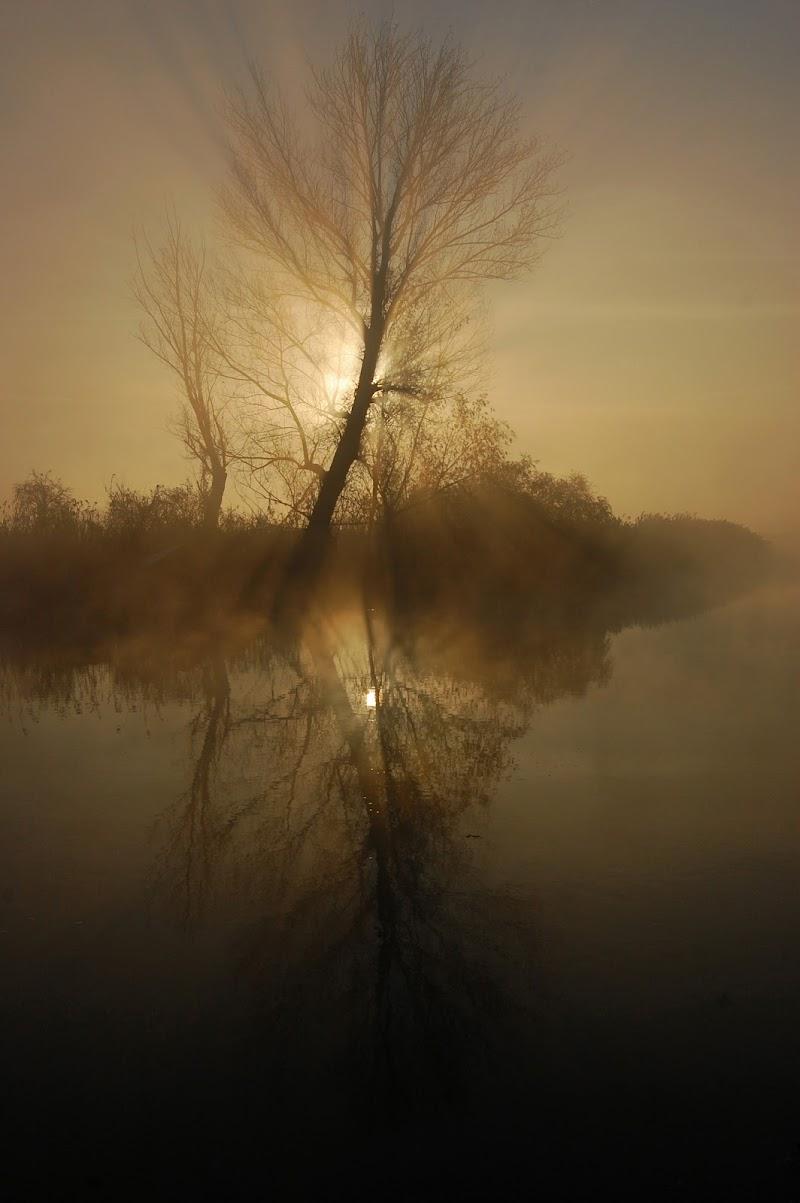 Luci e ombre sul fiume di Licia Piazza