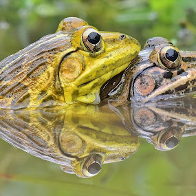 Love is in the Water by Subrata Das - Animals Amphibians