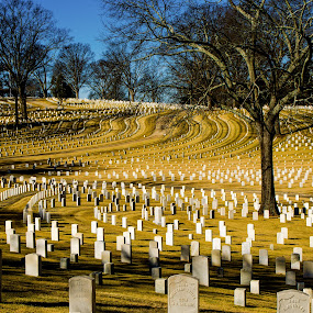 Fallen Hero's by Andrew Savasuk - City,  Street & Park  Historic Districts ( soldiers, tomb stone, cemetery, grave yard )