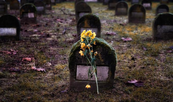 Un fiore per Giuditta di Sergio Locatelli
