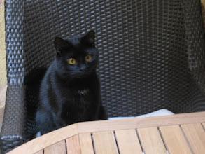 Photo: auch Katzimädis haben Hunger!!!!! (Balkon)