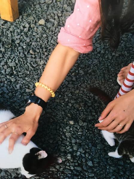 納沙布岬 猫