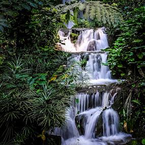 Water fall garden by Ashraf Jandali - Nature Up Close Gardens & Produce ( water, tree, blue, green, waterfall, bush, garden )
