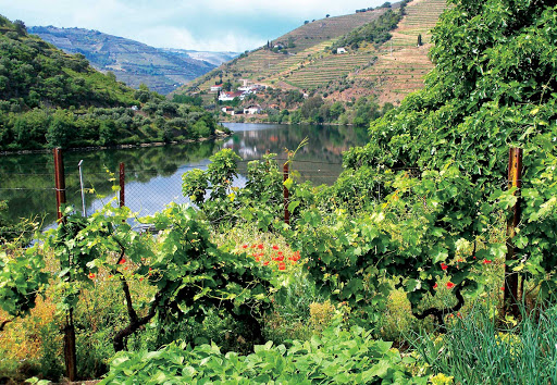 douro-river-greenery.jpg - Greenery along the pastoral banks of the Douro River in Portugal.