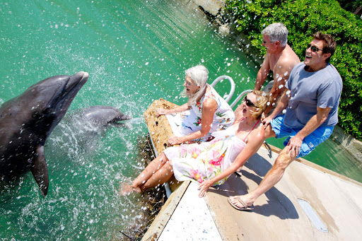 Have some splashy fun with dolphins on Grand Bahama Island.