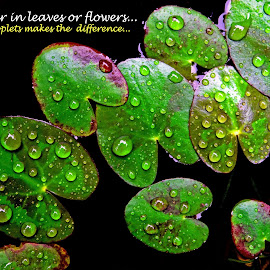 Whether in leaves or... by Asif Bora - Typography Quotes & Sentences