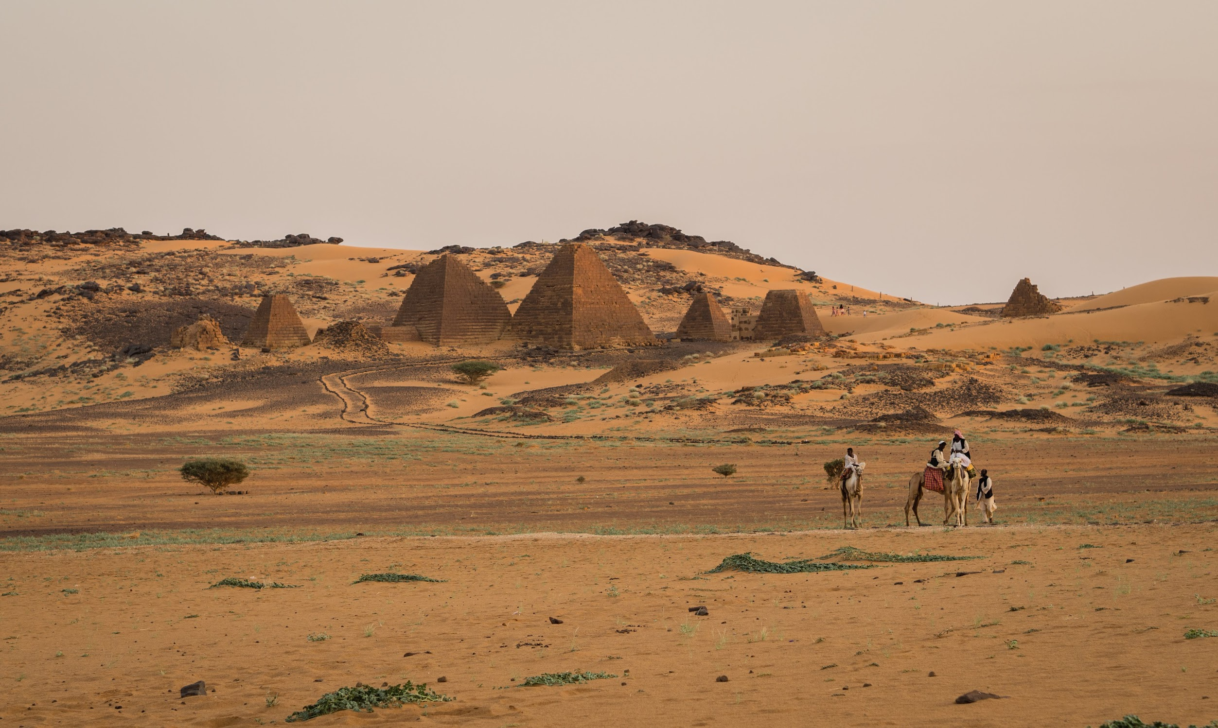 Camels and pyramids at Meroe