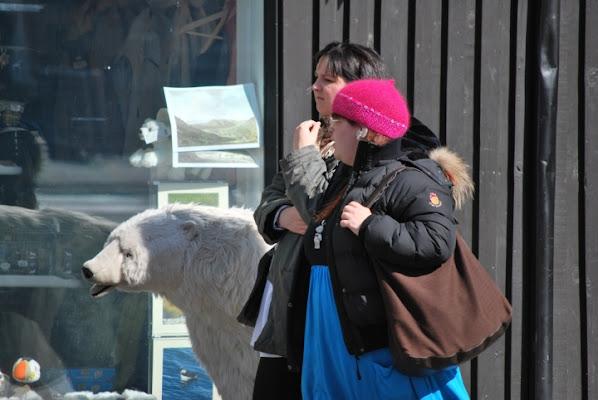 A spasso con l'orso a  Reykjavik di cla65