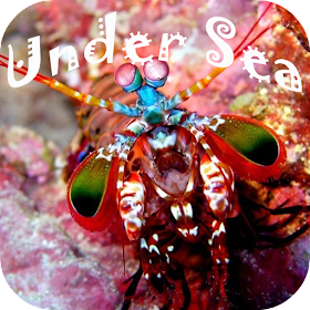 Под море головоломка