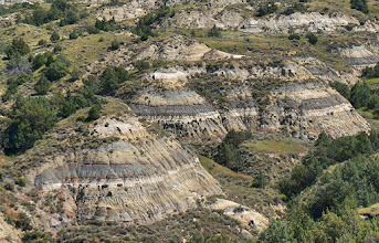 Photo: The bluish-gray layers are the result of volanic ash -- perhaps from the last explosion of the Yellowstone caldera some 600,000 years ago? -- settling here and being compressed into bentonite clay. The black layers point to carbon deposition, from the muck of swamps that once stood here, that was compressed into coal.