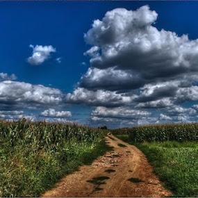 by Nataša Kos - Landscapes Prairies, Meadows & Fields