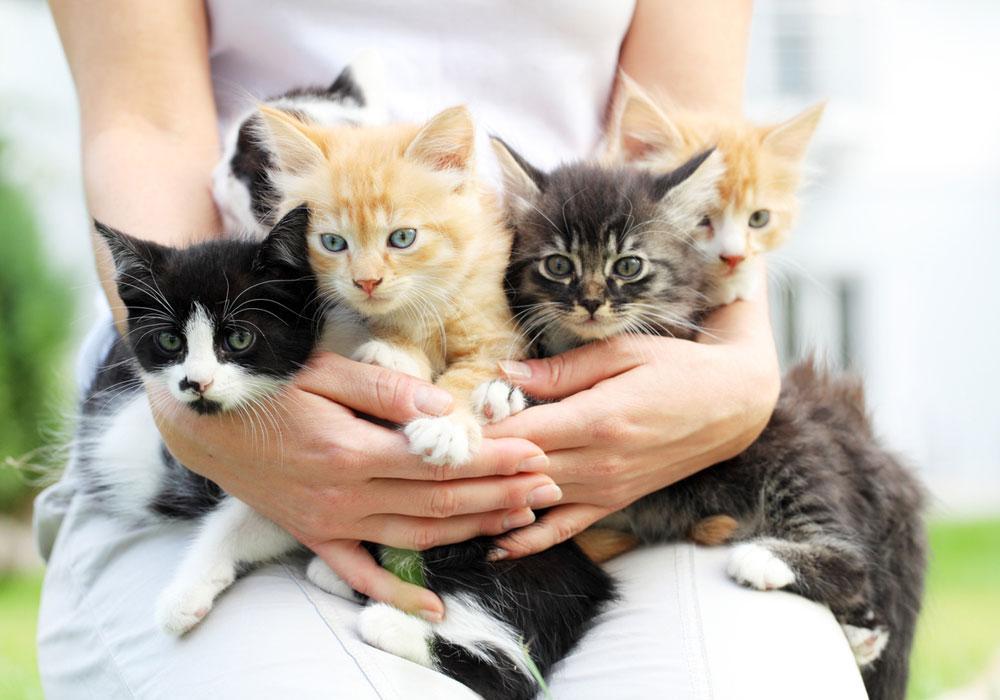 C:\Users\PC\Downloads\0604_kittens_1000.jpg