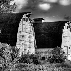 Two Barns (B+W) by Briand Sanderson - Black & White Buildings & Architecture ( farm, washington state, b&w, barn, black and white, nisqually national wildlife refuge, agriculture, united states )