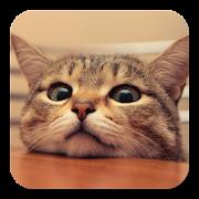Q Cat Live Wallpaper