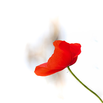 Red & White di Simona Ranieri