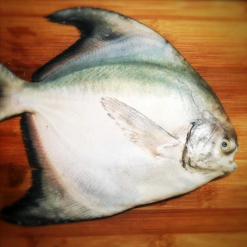 Black Bean, chinese, Preserved Lime, recipe, steamed fish, salted lime, salted lemon, 咸檸, 蒸魚, 豉汁,