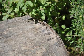 Photo: Les lézards se dorent la pilule au soleil sur l'hotel à insectes !