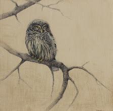 "Photo: ""Little Owl"" ©2011 LMcNee 12x12 mixed media on board"