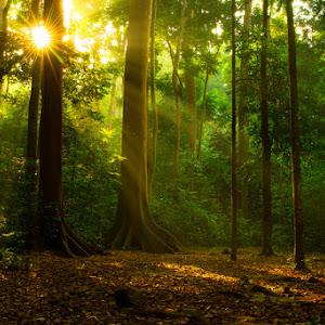 hutan21.jpg