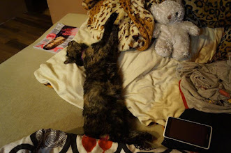 Photo: Wieści z nowego domku Szylkretki :) Witam, w zeszłą niedziele zaadoptowaliśmy kotkę. Pierwszego dnia była trochę przestraszona, ale po kilku godzinach czuła się jak u siebie w domu Dzisiaj chodzi krok w krok za swoją panią, domaga się pieszczot, ma swoje zabawki którymi chętnie się bawi. Ma ''starszą siostrę'' suczkę bokserka, z którą śpi. Jej ulubionym miejscem jest oczywiście łózko