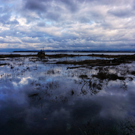 Padilla Bay  by Todd Reynolds - Landscapes Beaches