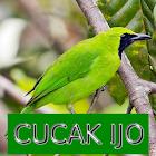 Master Kicau Cucak Ijo icon