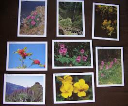 Photo: Flores da Madeira