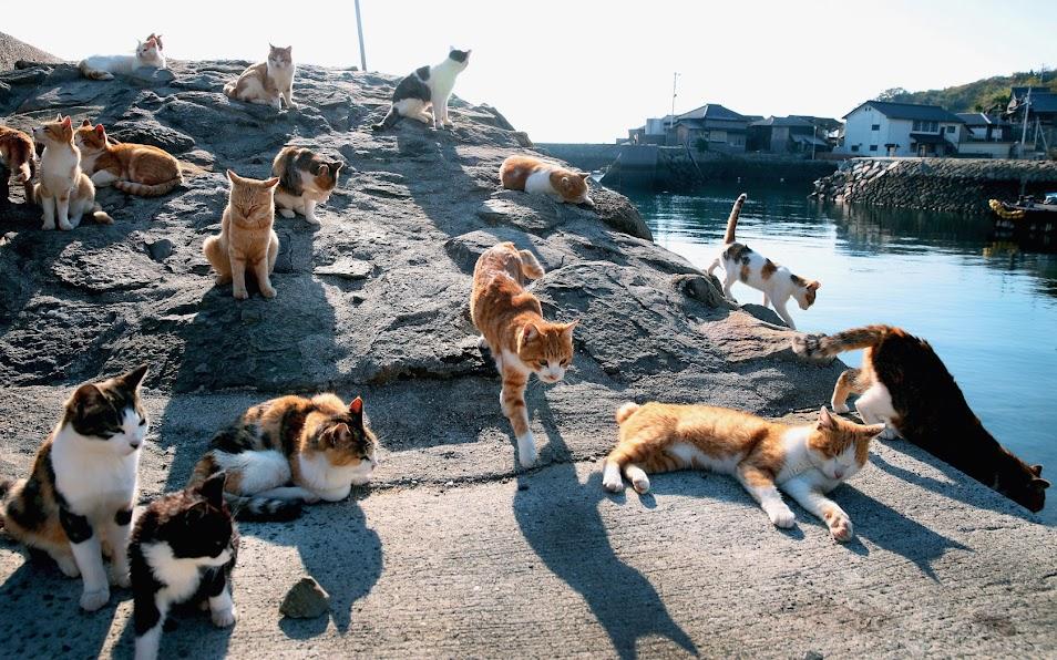những chú mèo dạo chơi trên đảo
