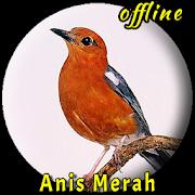 Kicau Burung Anis Merah Juara MP3