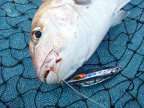 Photo: 真鯛! ファルコンのジグでキャッチ!