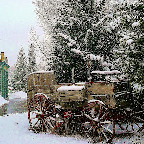 Colorado Spring by Tim Hall - City,  Street & Park  Historic Districts ( pines, wagon wheels, park, snow scene, snow  flakes, wagon, colorado, historic,  )