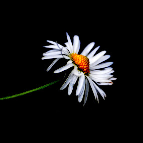 by Luis Antunes - Novices Only Flowers & Plants