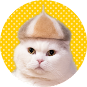 Wallpaper: Cats' Hair Hats