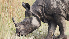 Land of the Secret Rhino thumbnail