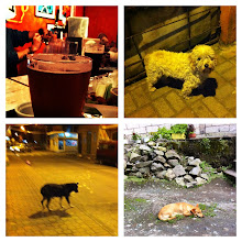 Photo: Collage.  Stray Dog Brewpub and some stray dogs around Baños.  The only place that serves any microbrews.  Nice change from Pilsener or Club cervezas.  Ecuador. June 2012.