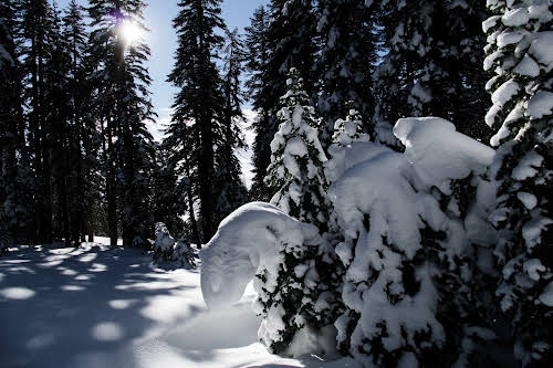 What to Do in Lake Tahoe in the Winter // Snowshoe winter hike in North Lake Tahoe