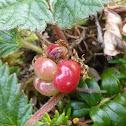 Nagoonberry