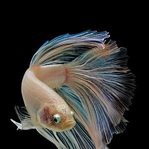 fish43.jpg