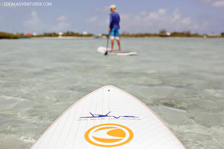 Stand Up Paddle Boarding through the Mangroves (Best Things to Do in Providenciales).
