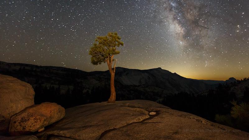 Photo: Juniper and Milky Way