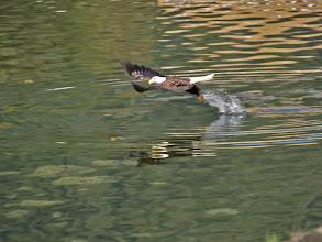 Photo: Grabbing a fish