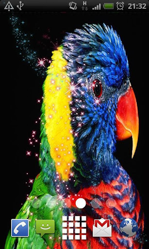 Colorful Parrot HD Wallpaper