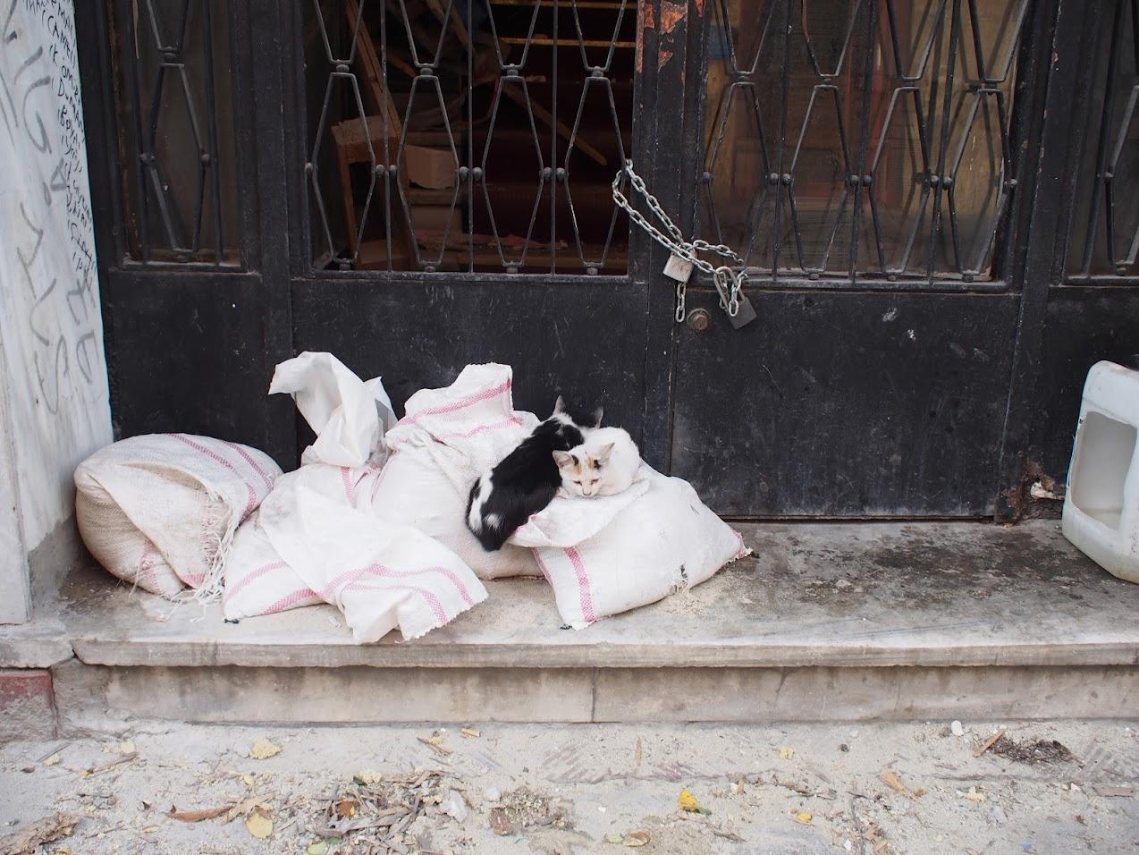 stray cats istanbul