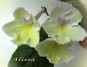 Photo: Alissa