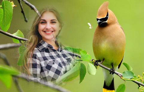 Birds Photo Frames - náhled