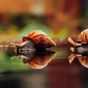 Triangle Love by Faiq Alfaizi - Animals Amphibians