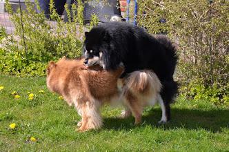 Photo: Jokka på besøg i maj for at parre Kiira