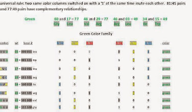 Photo: T/U = 00,    C = 01,    A = 10,    G = 11.  Green family codons code for the same amino acids as yellow color family codonsbut the patterns and purpose differ.There is no wobbling or uncertainty or degenerate codons involved here.  Of interest here is the relationship between the start/methionine codon (35) AUG and the stop codon (14) UGA, and their relationship to green color family codons (34) AUA ile and (15) UGG trp.  Why in every case do member pairs in same color families that code for the same amino acids break out into 81:45 or 77:49 relationships?