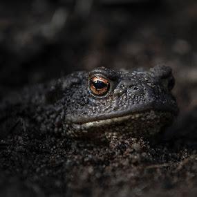 In my garden by Annelie Hallberg - Animals Reptiles