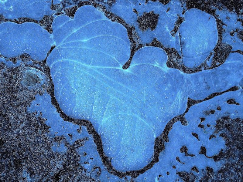 Cuore di ghiaccio blu di iento